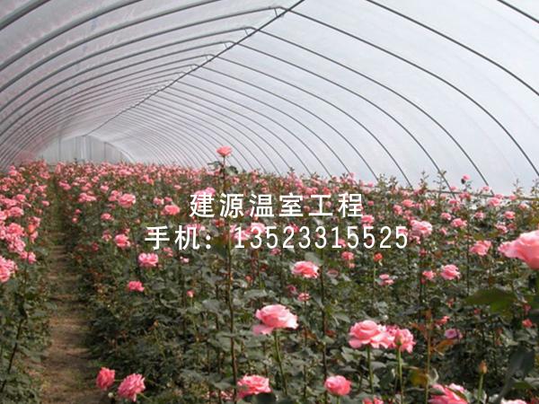 花卉六彩开奖直播现场